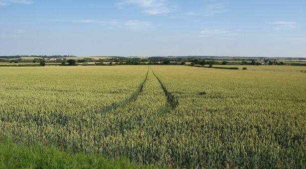 Jaunojo ūkininko parama padeda įsikurti naujiems ūkiams