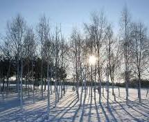 Kaip gyvena sodas žiemą?