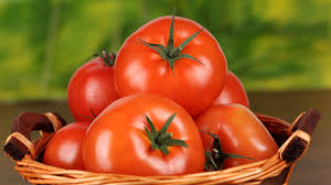 Pomidorų veislės