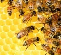 Medus ir jo susidarymas