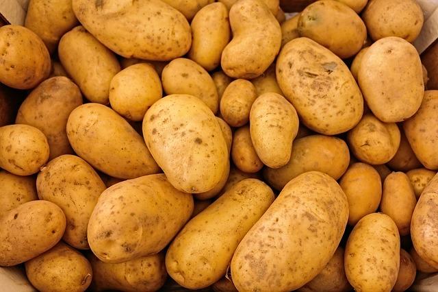 bulviu_auginimas