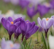 Gėlių apsauga nuo kenkėjų ir ligų