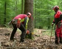 Miško pardavimas: paprastai ir pelningai