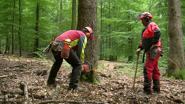 Parduoda mišką