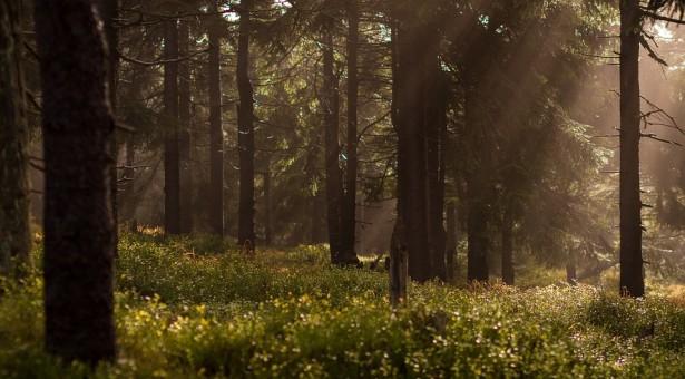 Miškas – ilgalaikė investicija
