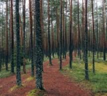 Kaip žmogų veikia medžių energetika