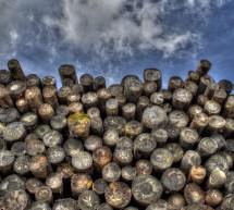 Miško technika: į ką atkreipti dėmesį renkantis?
