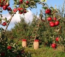 Sodininkystė – geriausias vaistas nuo įvairiausių ligų